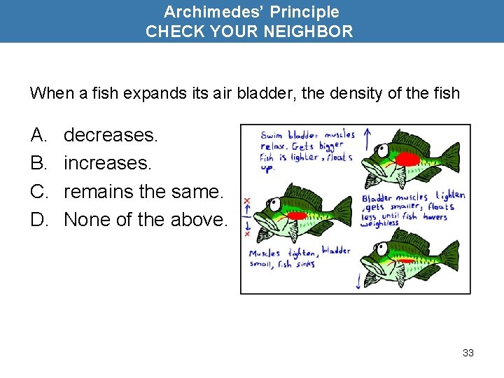 Archimedes' Principle CHECK YOUR NEIGHBOR When a fish expands its air bladder, the density