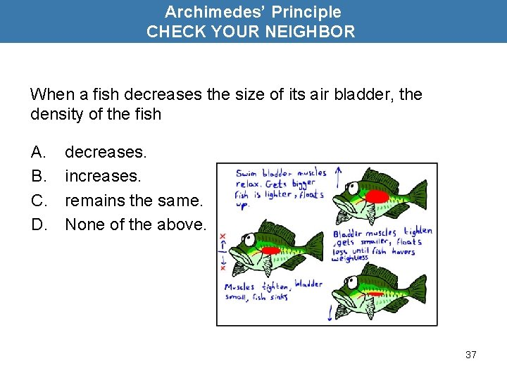 Archimedes' Principle CHECK YOUR NEIGHBOR When a fish decreases the size of its air