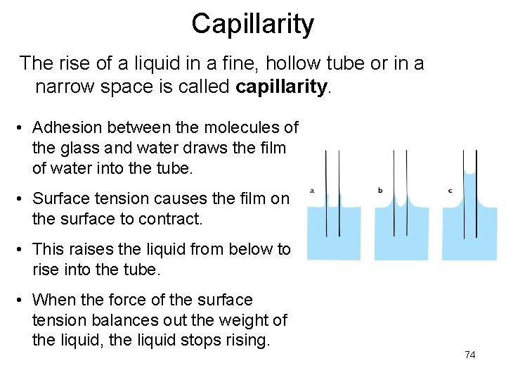 Capillarity The rise of a liquid in a fine, hollow tube or in a