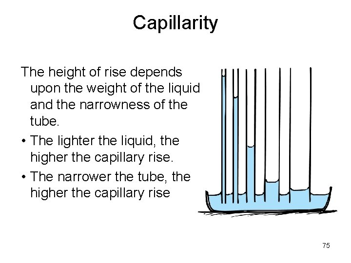 Capillarity The height of rise depends upon the weight of the liquid and the