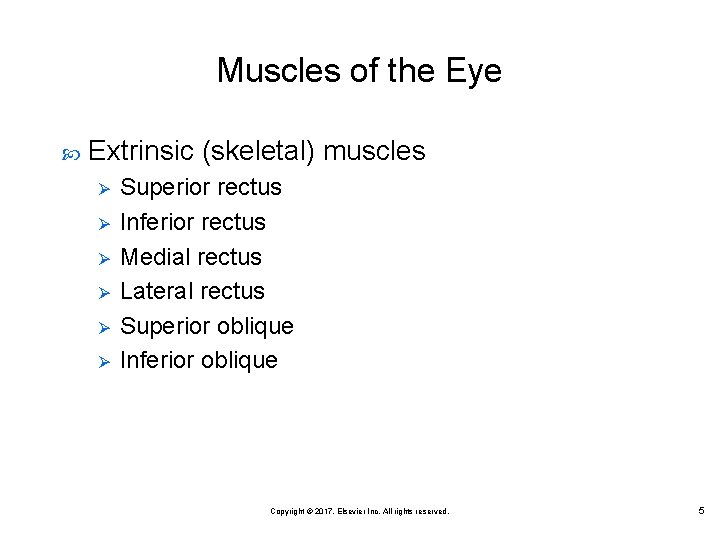 Muscles of the Eye Extrinsic (skeletal) muscles Ø Ø Ø Superior rectus Inferior rectus