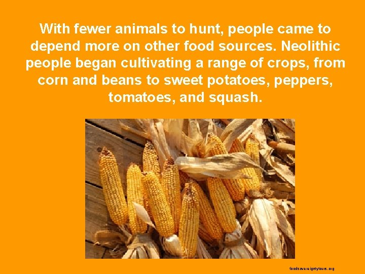 With fewer animals to hunt, people came to depend more on other food sources.