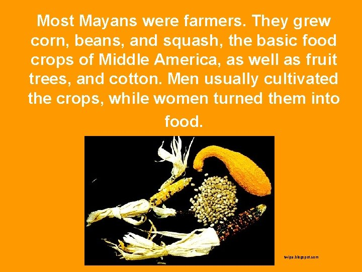 Most Mayans were farmers. They grew corn, beans, and squash, the basic food crops