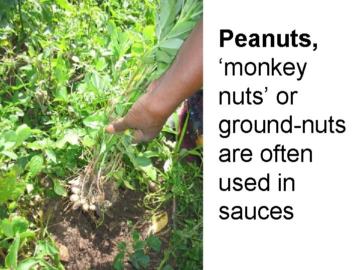 Peanuts, 'monkey nuts' or ground-nuts are often used in sauces