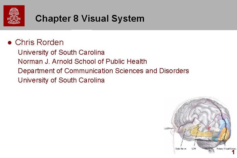 Chapter 8 Visual System l Chris Rorden University of South Carolina Norman J. Arnold