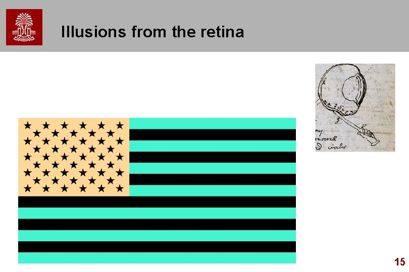 Illusions from the retina 15
