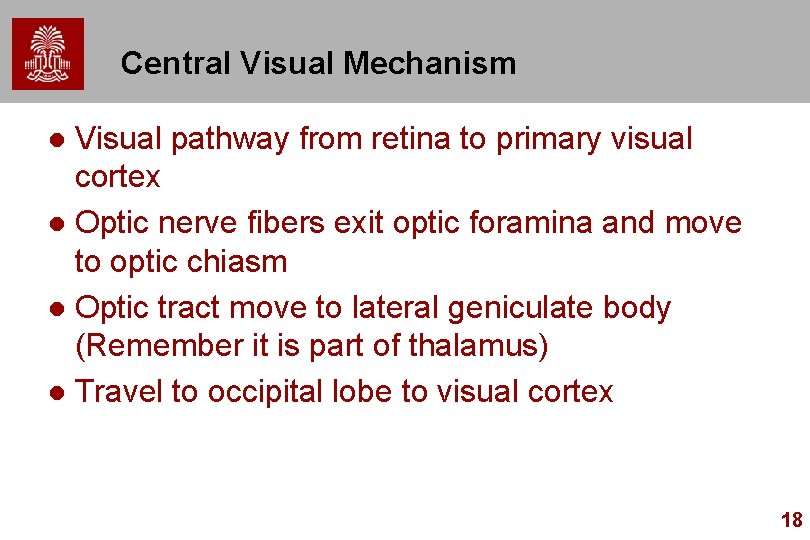 Central Visual Mechanism Visual pathway from retina to primary visual cortex l Optic nerve