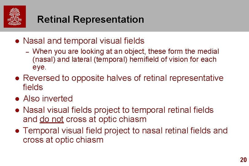 Retinal Representation l Nasal and temporal visual fields – l l When you are