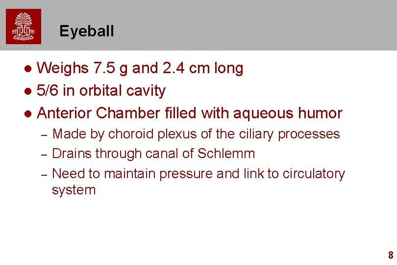 Eyeball Weighs 7. 5 g and 2. 4 cm long l 5/6 in orbital