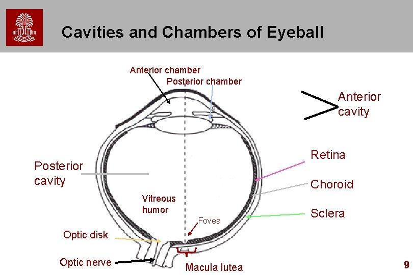 Cavities and Chambers of Eyeball Anterior chamber Posterior chamber Anterior cavity Retina Posterior cavity