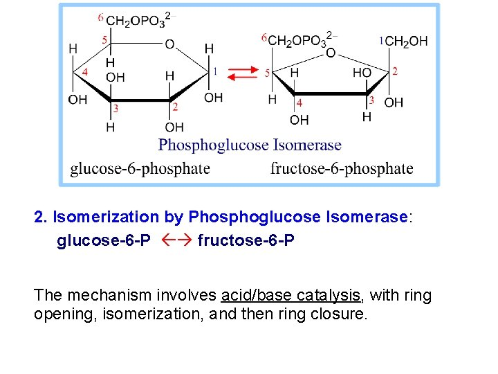 2. Isomerization by Phosphoglucose Isomerase: glucose-6 -P fructose-6 -P The mechanism involves acid/base catalysis,