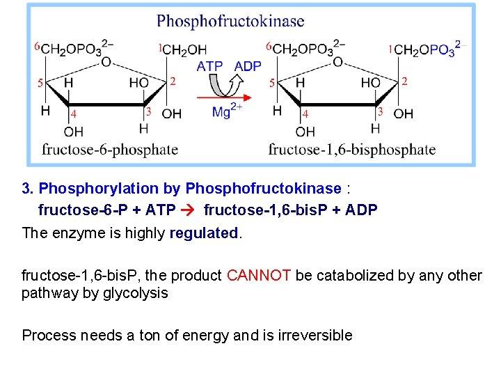 3. Phosphorylation by Phosphofructokinase : fructose-6 -P + ATP fructose-1, 6 -bis. P +