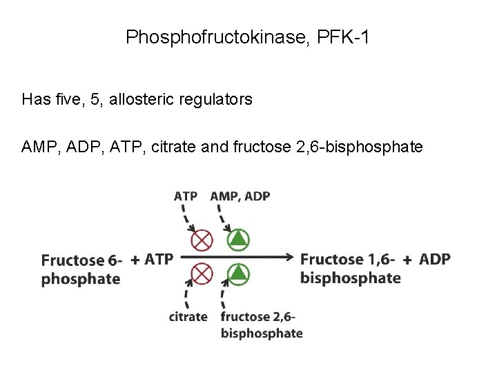 Phosphofructokinase, PFK-1 Has five, 5, allosteric regulators AMP, ADP, ATP, citrate and fructose 2,