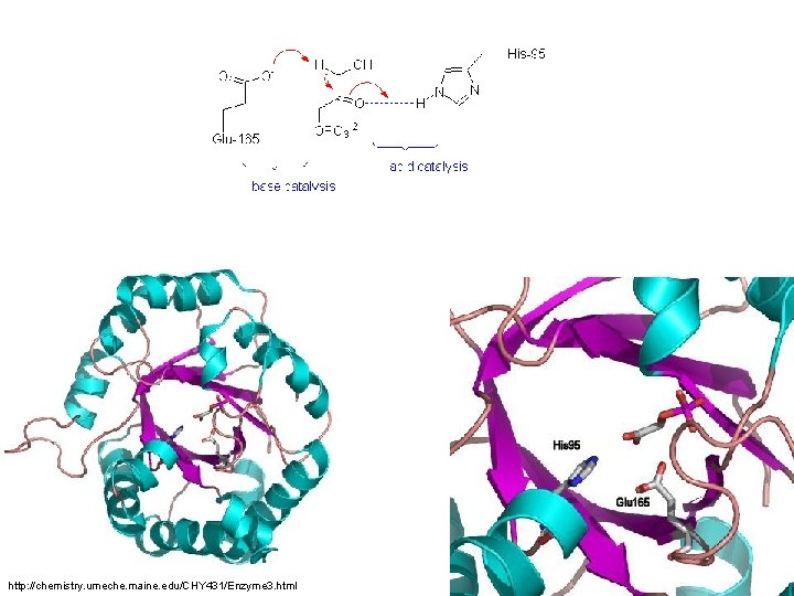 http: //chemistry. umeche. maine. edu/CHY 431/Enzyme 3. html