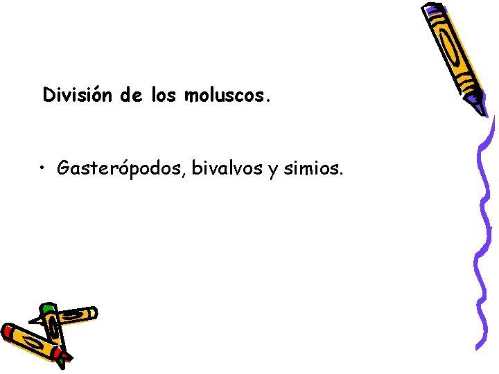 División de los moluscos. • Gasterópodos, bivalvos y simios.