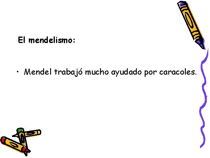 El mendelismo: • Mendel trabajó mucho ayudado por caracoles.