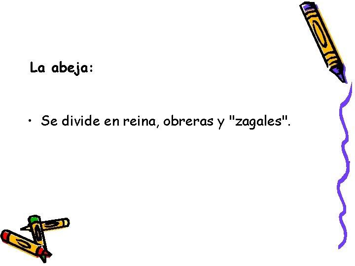 """La abeja: • Se divide en reina, obreras y """"zagales""""."""
