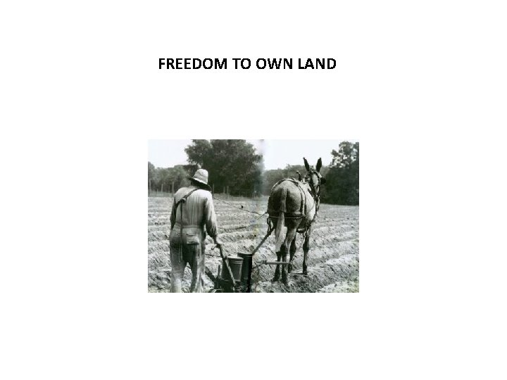 FREEDOM TO OWN LAND