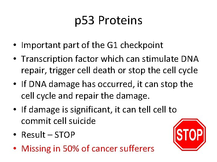 p 53 Proteins • Important part of the G 1 checkpoint • Transcription factor