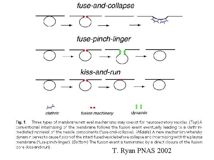 T. Ryan PNAS 2002