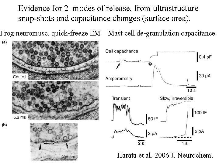 Evidence for 2 modes of release, from ultrastructure snap-shots and capacitance changes (surface area).
