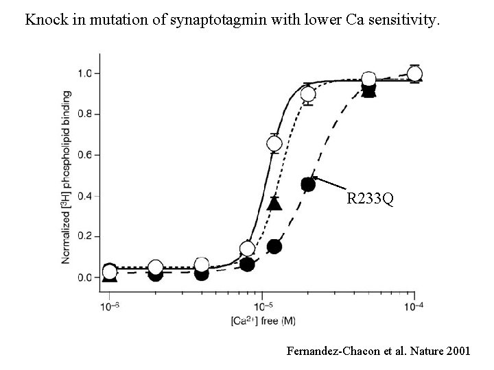 Knock in mutation of synaptotagmin with lower Ca sensitivity. R 233 Q Fernandez-Chacon et