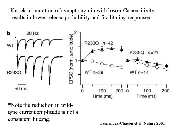 Knock in mutation of synaptotagmin with lower Ca sensitivity results in lower release probability