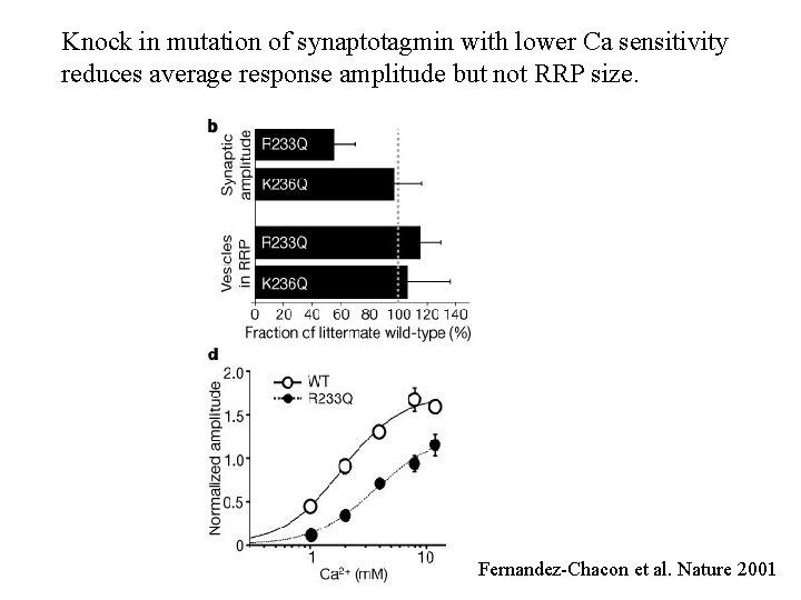 Knock in mutation of synaptotagmin with lower Ca sensitivity reduces average response amplitude but
