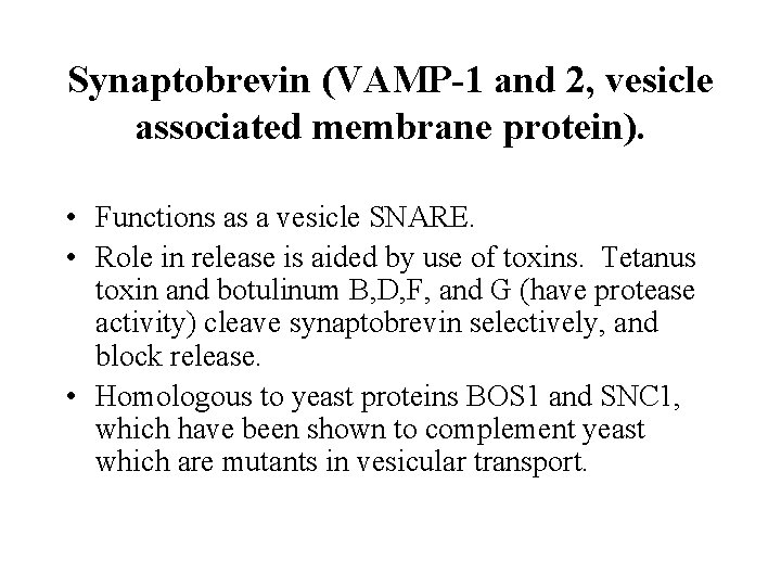 Synaptobrevin (VAMP-1 and 2, vesicle associated membrane protein). • Functions as a vesicle SNARE.