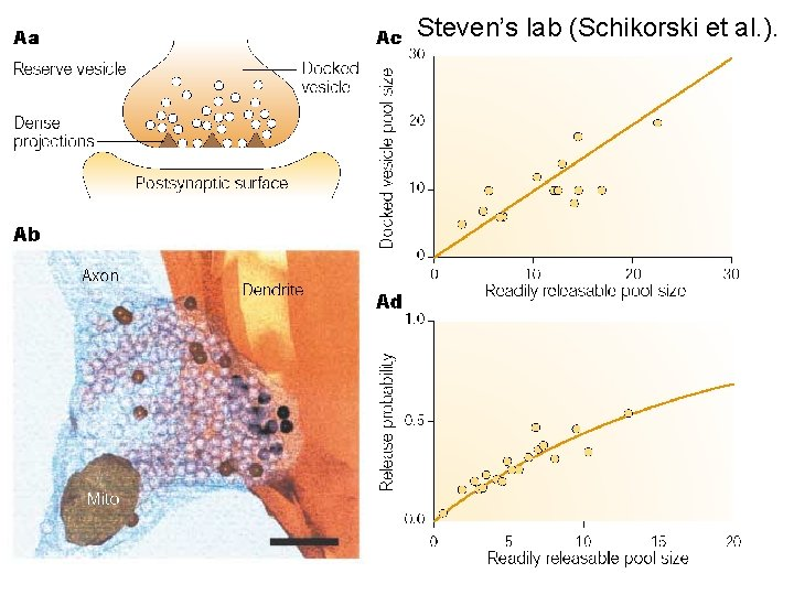 Steven's lab (Schikorski et al. ).