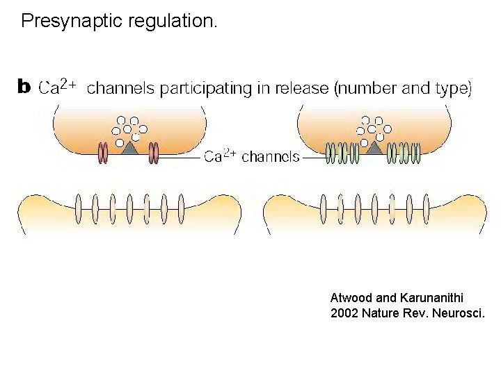 Presynaptic regulation. Atwood and Karunanithi 2002 Nature Rev. Neurosci.