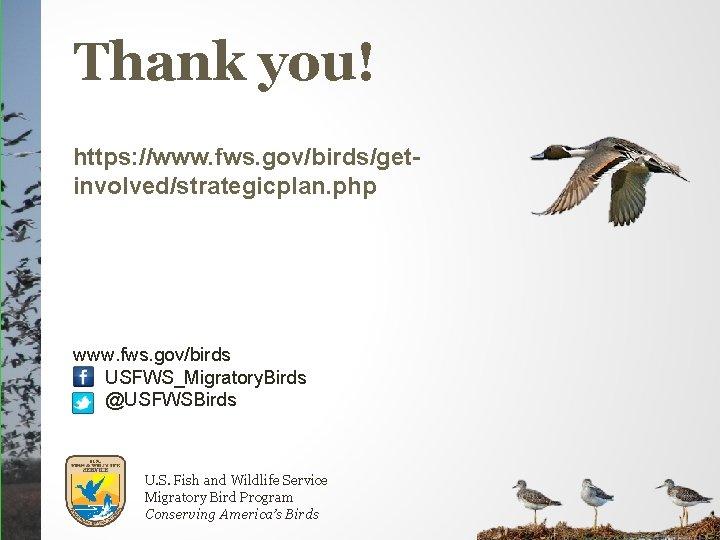 Thank you! https: //www. fws. gov/birds/getinvolved/strategicplan. php www. fws. gov/birds USFWS_Migratory. Birds @USFWSBirds U.