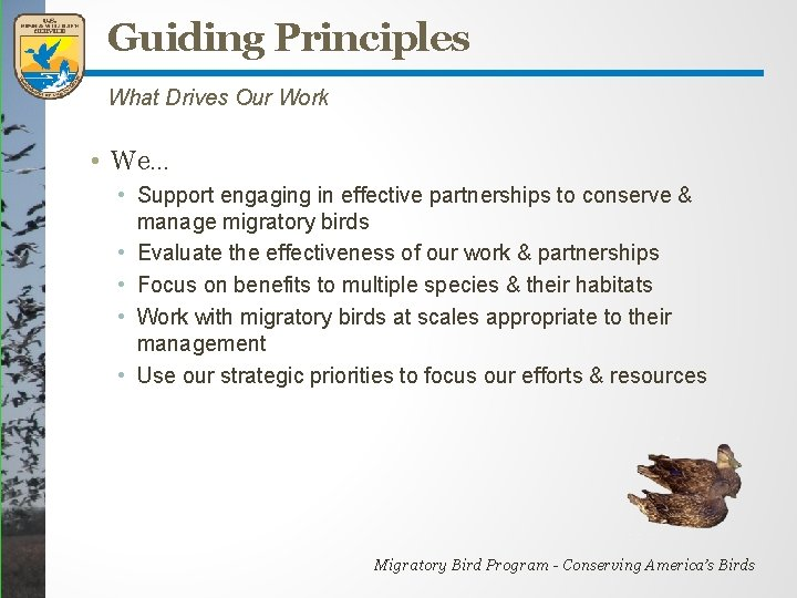 Guiding Principles What Drives Our Work • We… • Support engaging in effective partnerships