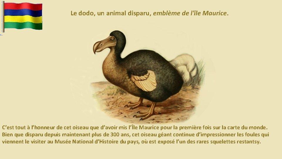 Le dodo, un animal disparu, emblème de l'île Maurice. C'est tout à l'honneur de