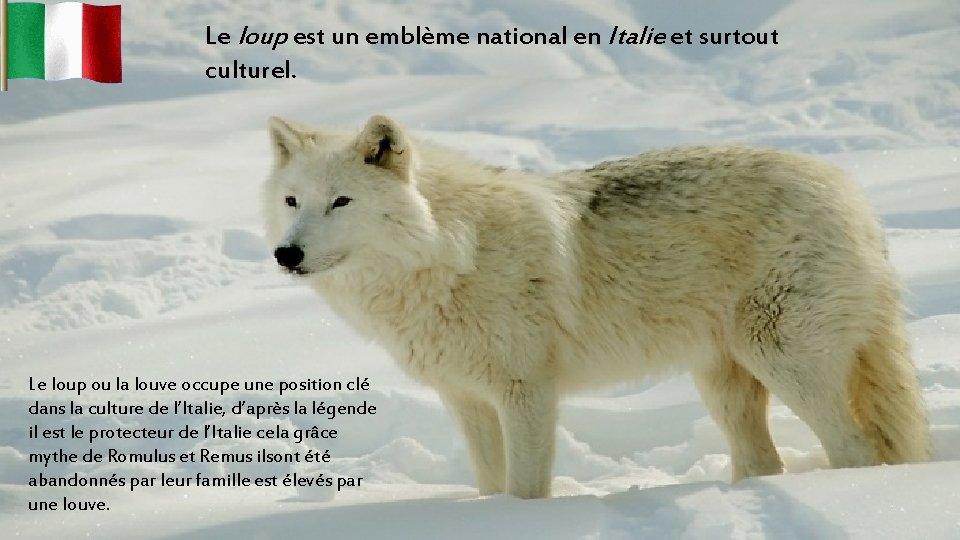 Le loup est un emblème national en Italie et surtout culturel. Le loup ou
