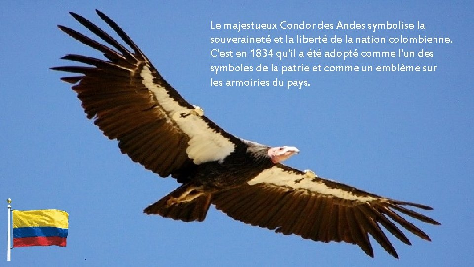Le majestueux Condor des Andes symbolise la souveraineté et la liberté de la nation