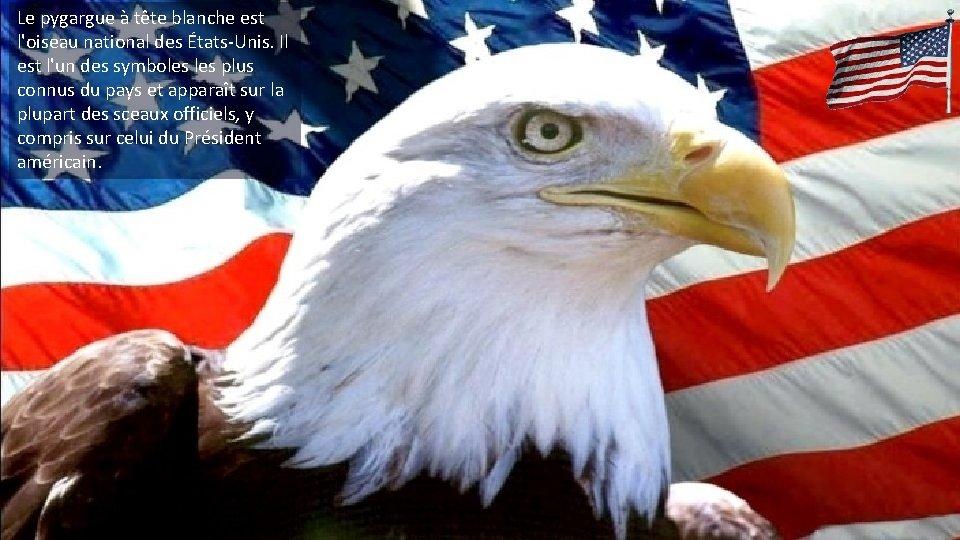 Le pygargue à tête blanche est l'oiseau national des États-Unis. Il est l'un des