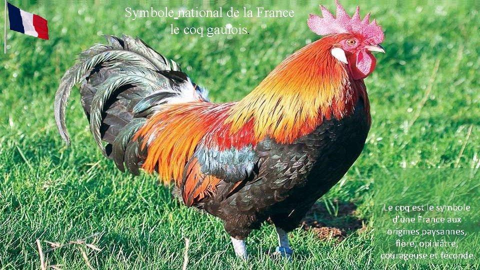 Symbole national de la France. le coq gaulois. Le coq est le symbole d'une