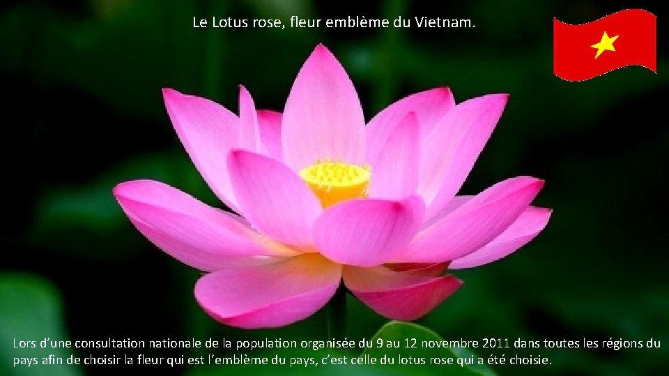 Le Lotus rose, fleur emblème du Vietnam. Lors d'une consultation nationale de la population