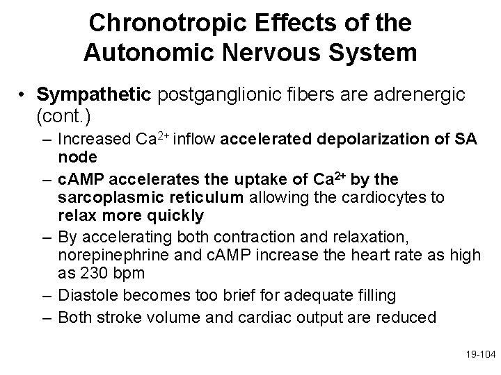 Chronotropic Effects of the Autonomic Nervous System • Sympathetic postganglionic fibers are adrenergic (cont.