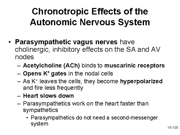 Chronotropic Effects of the Autonomic Nervous System • Parasympathetic vagus nerves have cholinergic, inhibitory