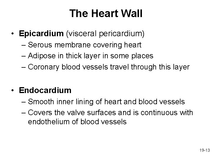 The Heart Wall • Epicardium (visceral pericardium) – Serous membrane covering heart – Adipose