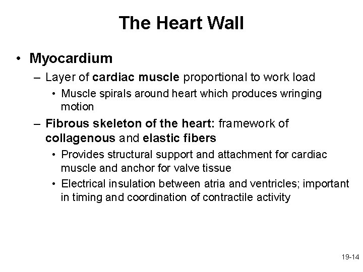 The Heart Wall • Myocardium – Layer of cardiac muscle proportional to work load