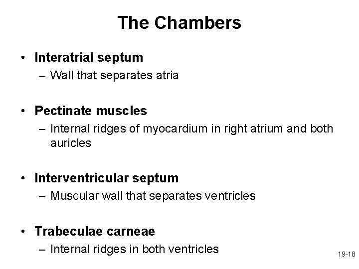 The Chambers • Interatrial septum – Wall that separates atria • Pectinate muscles –