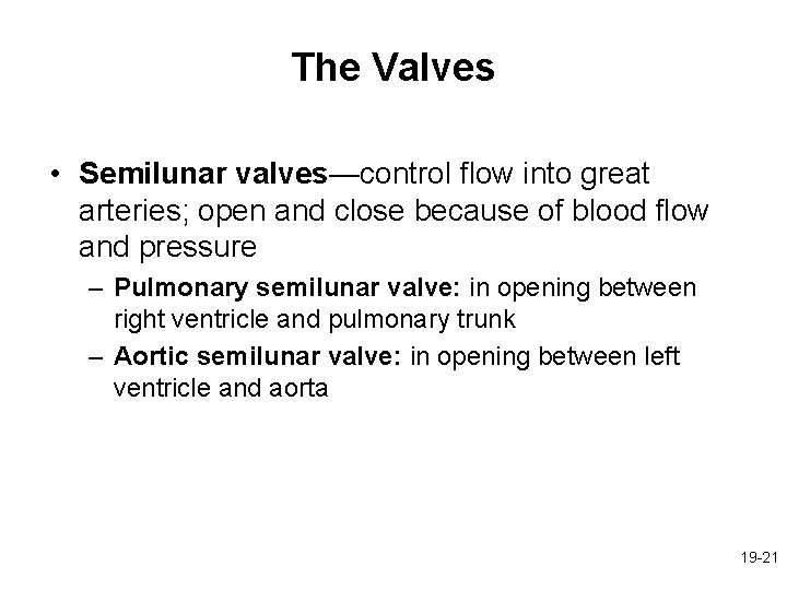 The Valves • Semilunar valves—control flow into great arteries; open and close because of