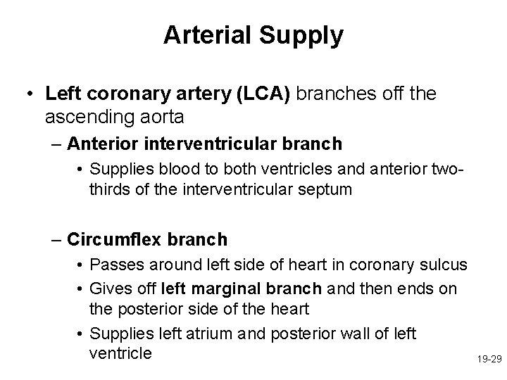 Arterial Supply • Left coronary artery (LCA) branches off the ascending aorta – Anterior