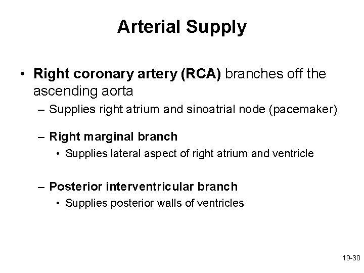 Arterial Supply • Right coronary artery (RCA) branches off the ascending aorta – Supplies