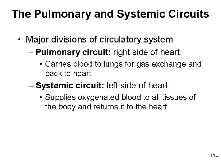 The Pulmonary and Systemic Circuits • Major divisions of circulatory system – Pulmonary circuit: