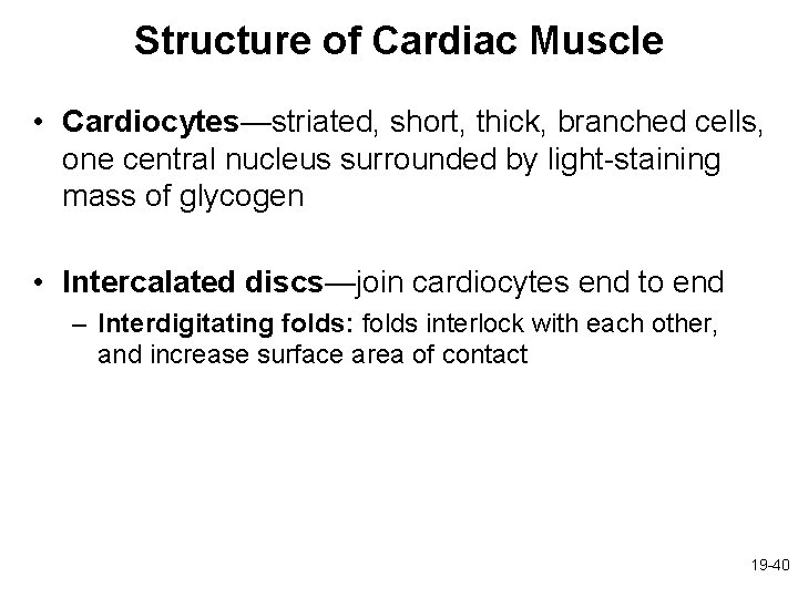 Structure of Cardiac Muscle • Cardiocytes—striated, short, thick, branched cells, one central nucleus surrounded