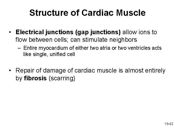 Structure of Cardiac Muscle • Electrical junctions (gap junctions) allow ions to flow between